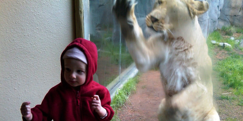 Danger Lion Zoo Kid 2 by Yin EDIT