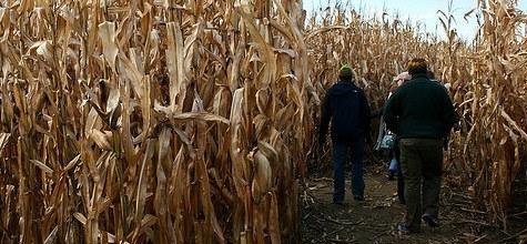 Corn Maze by Carmelo Speltino pigliapost 4026208026 EDIT