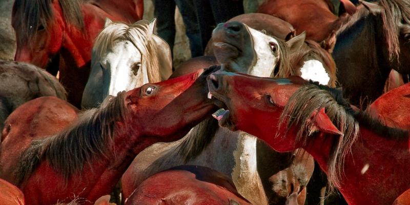 Horses by Paulo Brandao paulobrandao 2417645436 EDIT