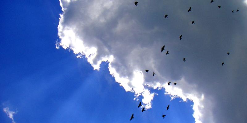 Crows EDIT