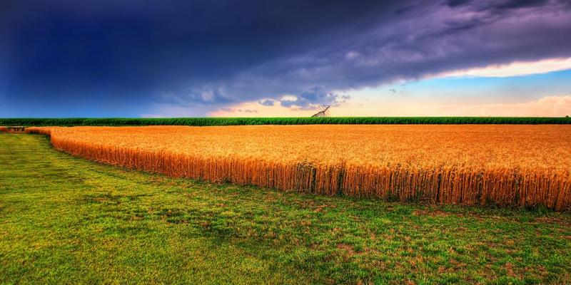 Wheat Field by James Watkins 7115229223 EDIT