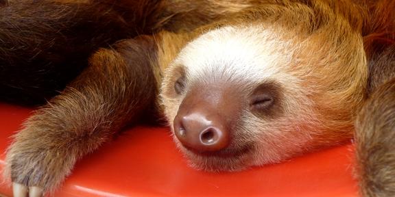 Sloth by Jenny Jozwiak 4797280092