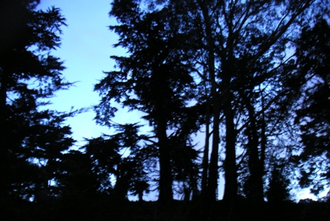 Golden Gate Park, Dusk